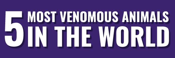 5 Most Venomous Animals in the World